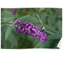 Bee Busy on Butterfly Bush  Poster