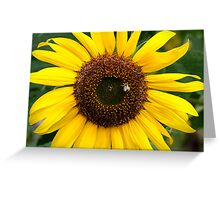 Sunflower Gold Greeting Card