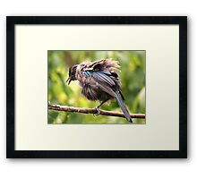 Tui......OK,  what comedian stole my other leg......? Framed Print