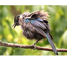 Tui......OK,  what comedian stole my other leg......? Photographic Print
