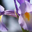 Purple Bliss by Abbey Bolton