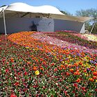 Canberra Floriade by JD22