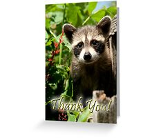 Thank You Baby Raccoon Greeting Card