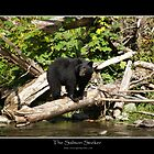 THE SALMON SEEKER (Black Bear) by Skye Ryan-Evans