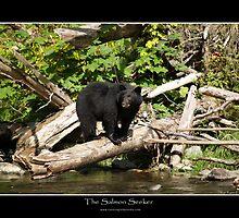 THE SALMON SEEKER (Black Bear) by Skye Ryan-Evans