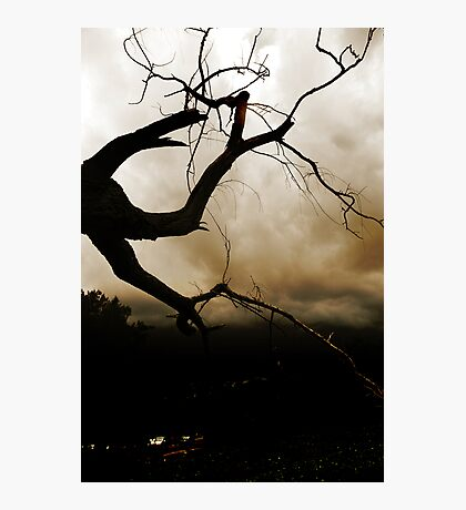 Dark tree Photographic Print