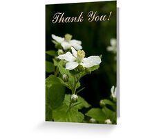 Thank You Wildflowers Greeting Card