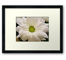 pretty white daisy flower pattern Framed Print