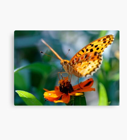 Butterfly in Aoyama, Tokyo, Japan Canvas Print