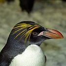 Profile of a Penguin by Kristin Nichole Hamm