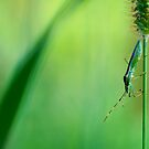 Insect on a grass stalk, Aoyama, Tokyo, Japan by Alfie Goodrich