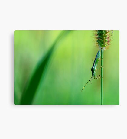 Insect on a grass stalk, Aoyama, Tokyo, Japan Canvas Print