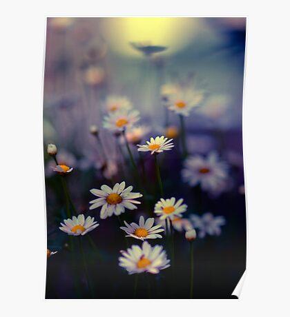 Urban daisies, Tokyo, Japan Poster