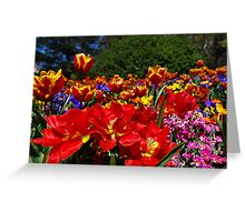 The Colours of Floriade Greeting Card