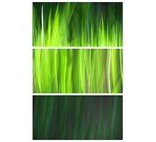 Organic - Triptych Photographic Print