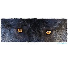 WOLF EYES Photographic Print