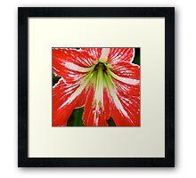 red stem Framed Print