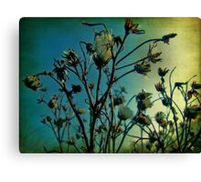Dried weeds Canvas Print