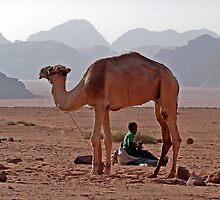 A framing camel - Wadi Rum by MichaelBr