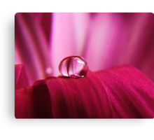 PINK Collection for the Cure - Pink reflections Canvas Print