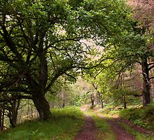 Forest Glade Scotland by jacqi