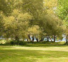 Tudhope Park by Gracey