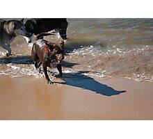3 Nick's Rescue Dog Kelpie-Border Collie Photographic Print