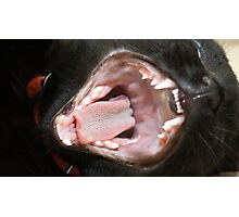 Cat Mouth Wide Open Photographic Print