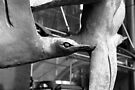 City Bird Seagul by richman