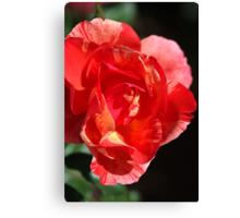 Vibrant Rose Canvas Print