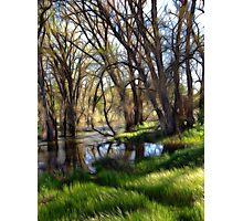 Dream Meadow Photographic Print