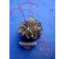 Flower pot on the wall Photographic Print