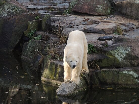Polar Bear Rock (Berlin)  by CreativeEm