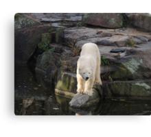 Polar Bear Rock (Berlin)  Canvas Print