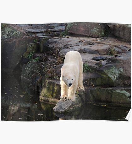 Polar Bear Rock (Berlin)  Poster