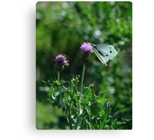 Nectar Stop Canvas Print