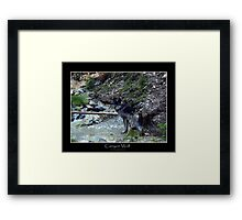 CANYON WOLF Framed Print