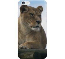 Alert Lion iPhone Case/Skin