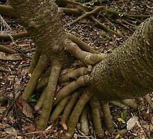Hand of Friendship by Julia Mainwaring-Berry