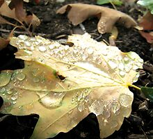 Morning Dew in Autumn by jansnow