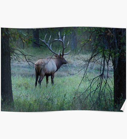Majestic Elk  Poster