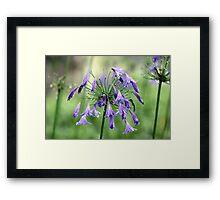 Purple Delight Framed Print
