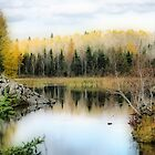 *AUTUMN IN MANITOBA* by Teresa Zieba