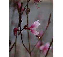 Autumn flower 2 Photographic Print