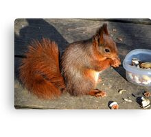 Hungry Red........ Canvas Print