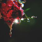 Dark Rose by Basia McAuley