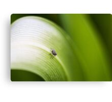 Leafy Fly Canvas Print