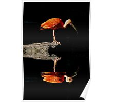 REFLECTED IBIS Poster