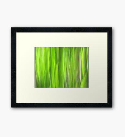 Grass - Light Framed Print
