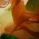 Fluid by Pamela Hubbard